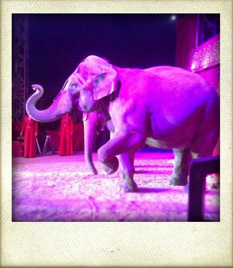 Zirkuselefant
